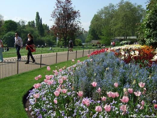 세인트 제임스 파크에서 즐긴 신록의 아름다움과 꽃의 향연
